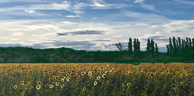 Field of Sunflowers in Avignon