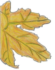 Leaf_Yellow