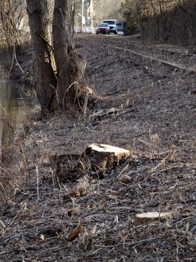 Tree Stumps and Survivor Guilt on the Canal Path-011