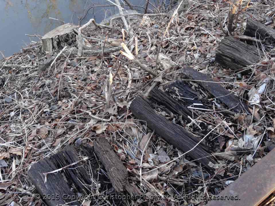 tree stump, old wooden ties beneath rusting railroad tracks