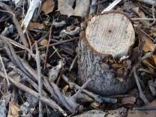 Tree Stumps on the Canal Path-047